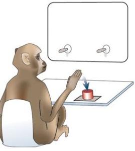 monkeybutton_01
